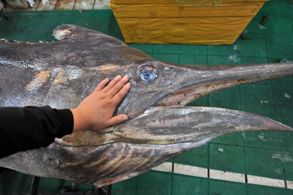 Fisherman Catches Over 300 Kilograms Swordfish In Qingdao