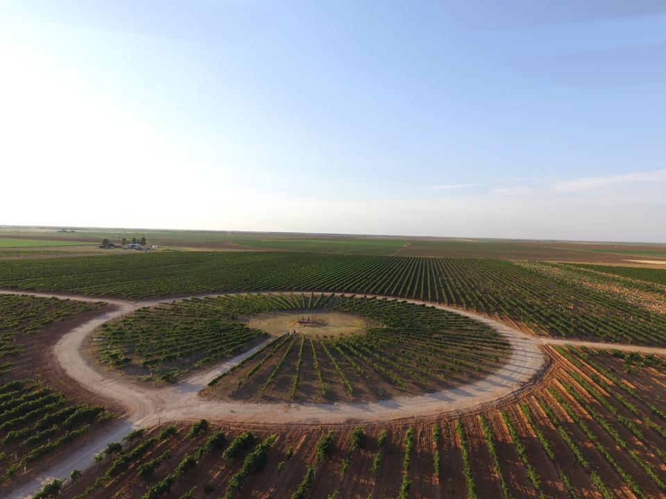 Reddy Vineyard's ″The Circle' Vineyard