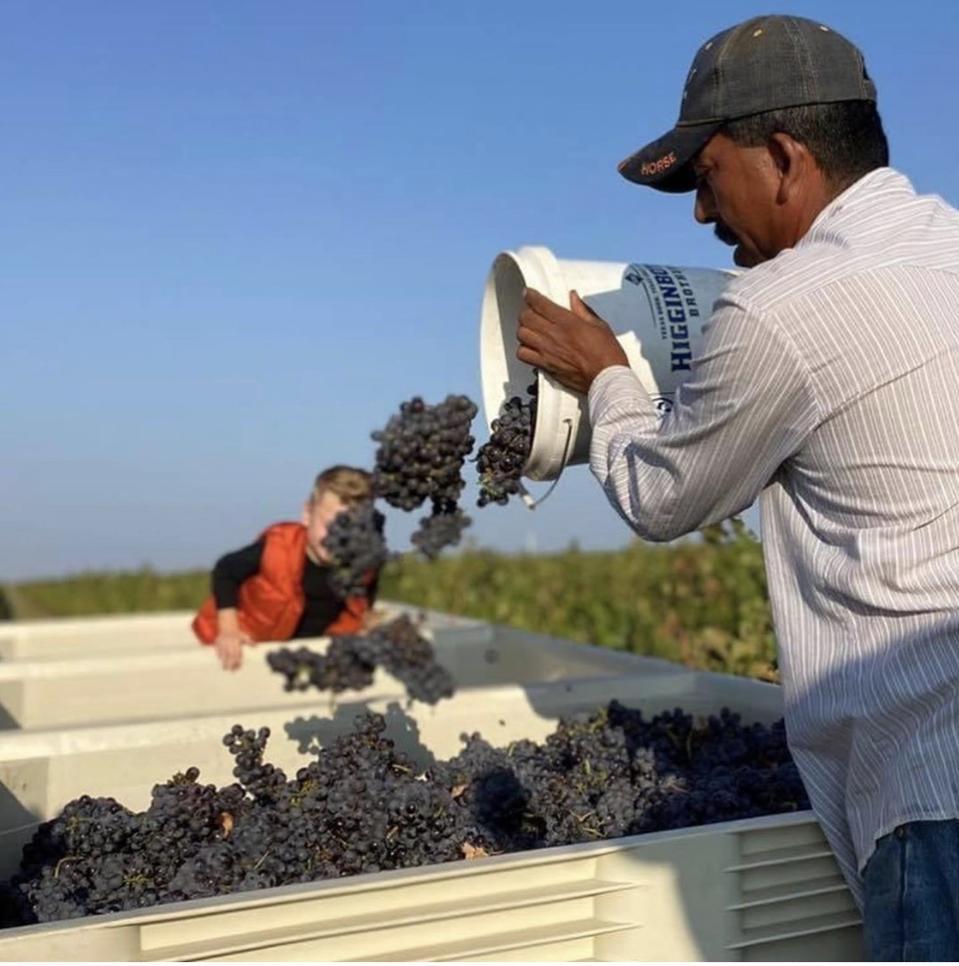 2020 Harvest at Texas's Farmhouse Vineyards