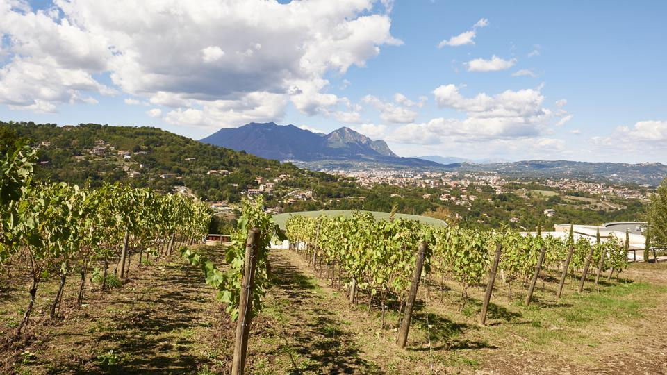 Irpinia, in Italy's Campania wine region, produces powerful white and red wines.