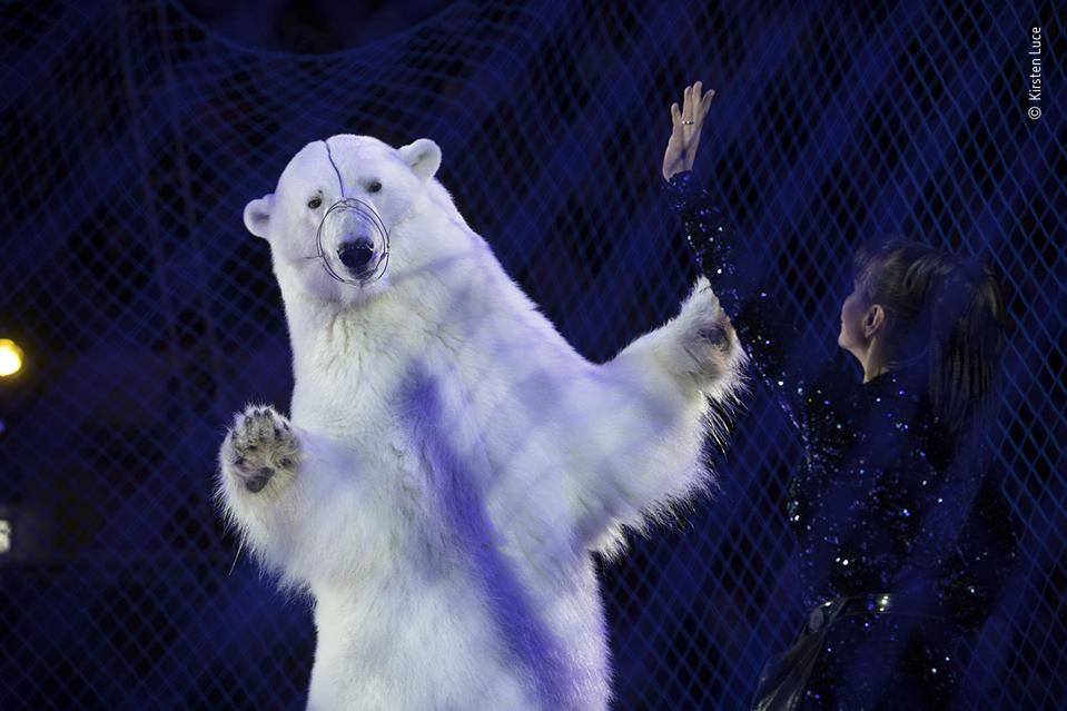 Wildlife Photographer of the Year: A wire muzzled polar bear performs in a Russian circus