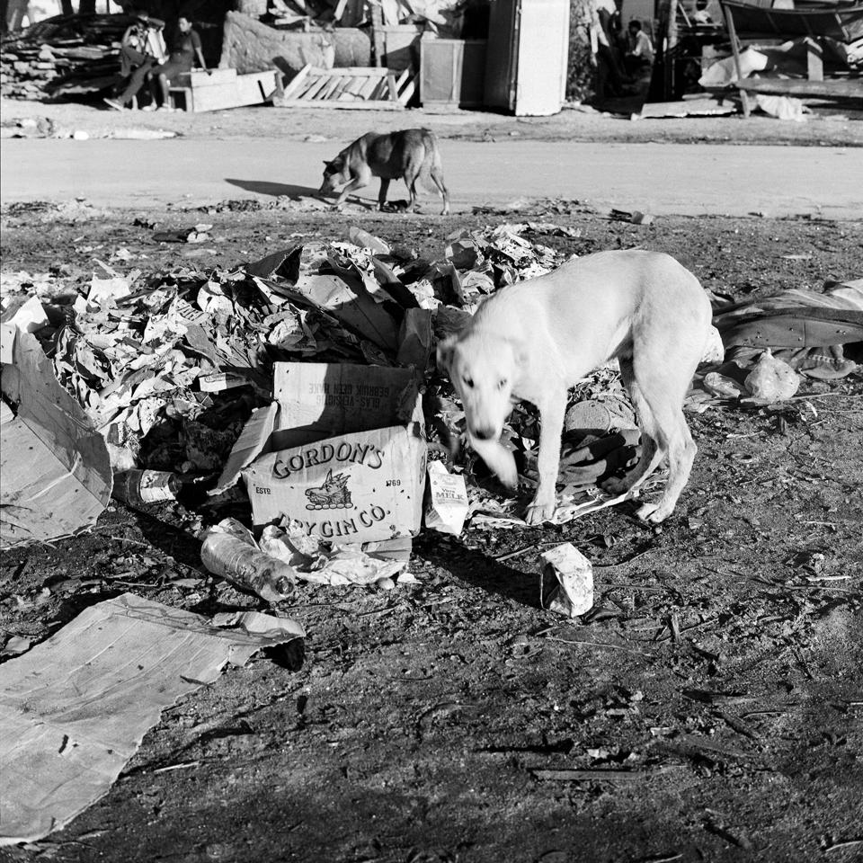 An image of a dog in South Africa during apartheid