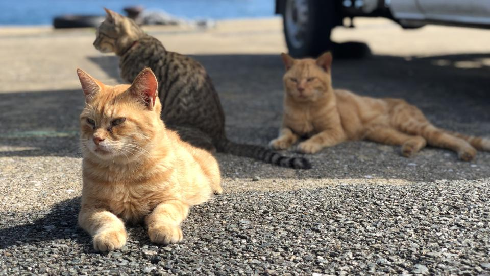 Cats Sitting On Road