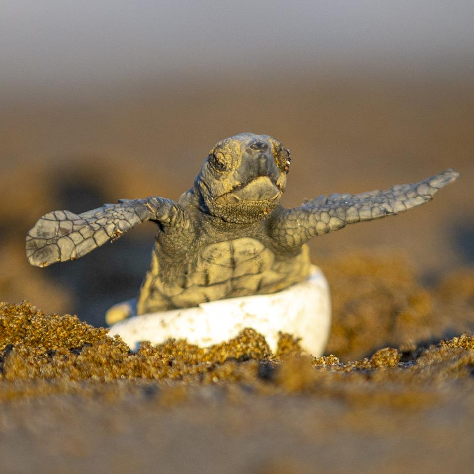 Patara Sea Turtle Conservation and Monitoring Program