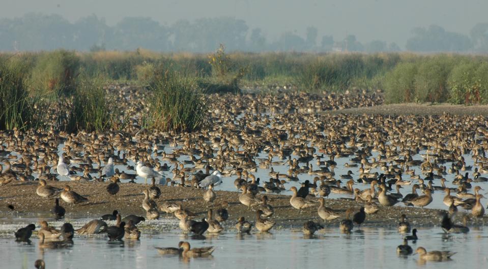 Flock of ducks in a wetland
