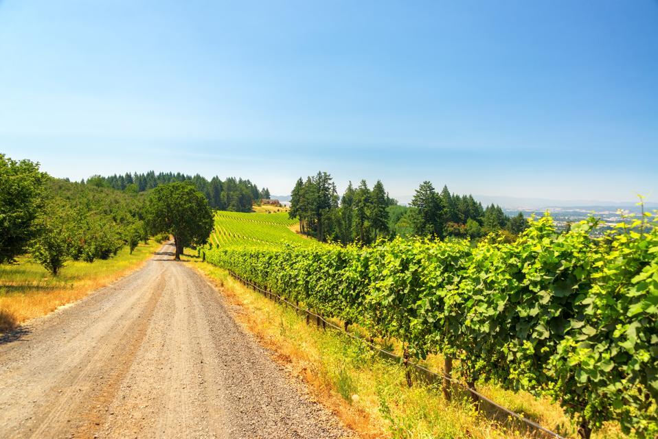 Gravel road and vineyard