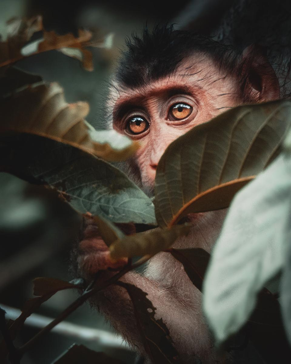 The World We Want, global photo contest: little monkey in Borneo