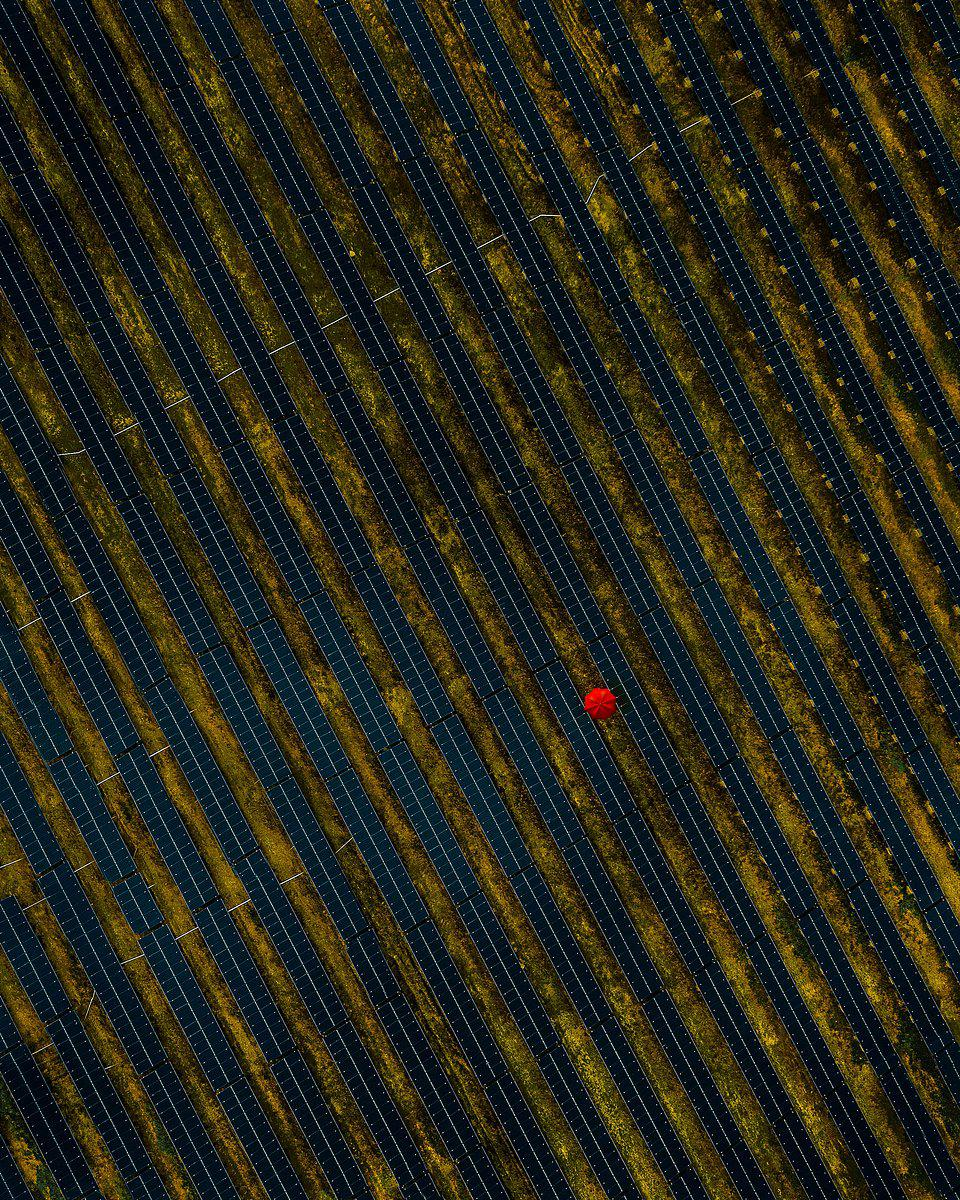 The World We Want, global photo contest: a field  full of solar panels.