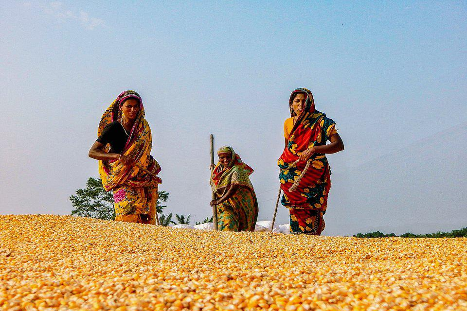 The World We Want, global photo contest: women working in a field  covered with drying corn.