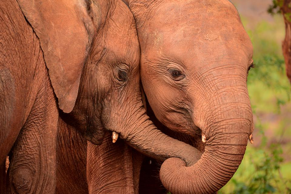 The World We Want, global photo contest: two orphan elephants