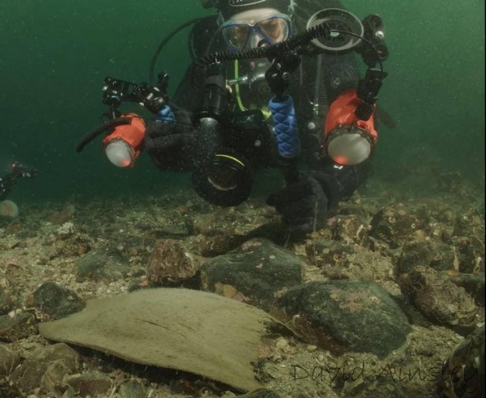 Diver finds egg