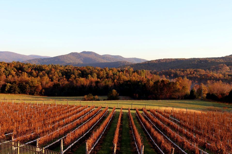 Virginia vineyard in the fall