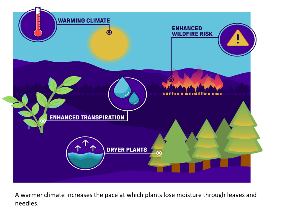 Graphic showing warming climate, more moisture loss, and enhanced wildfire risk