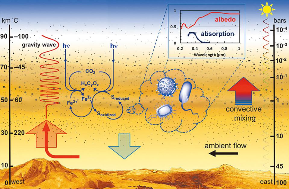 Illustration of the idea that Venus's cloud-rich atmosphere could house microorganisms.