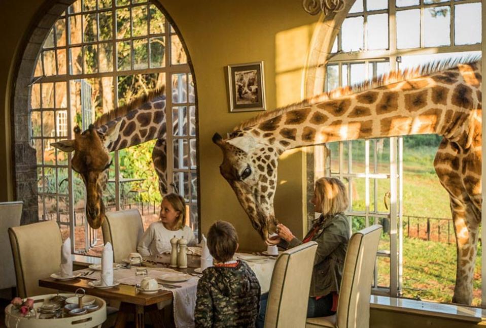 Giraffe Manor Kenya Nairobi Giraffes