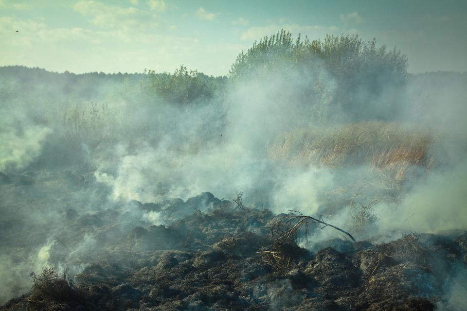 Peat, wood, and dry grass burning in the early spring.