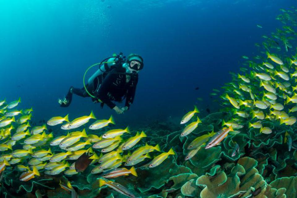 Alexandra Cousteau diving underwater with a school of fish and corals below.