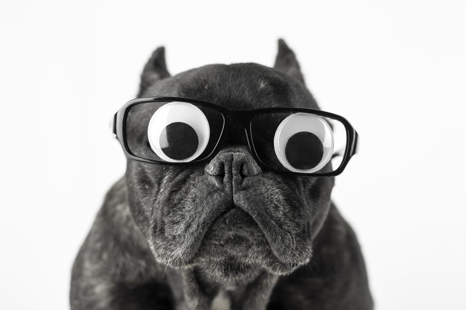 Dog with glasses and bulging eyes - Funny bosses build resilient teams