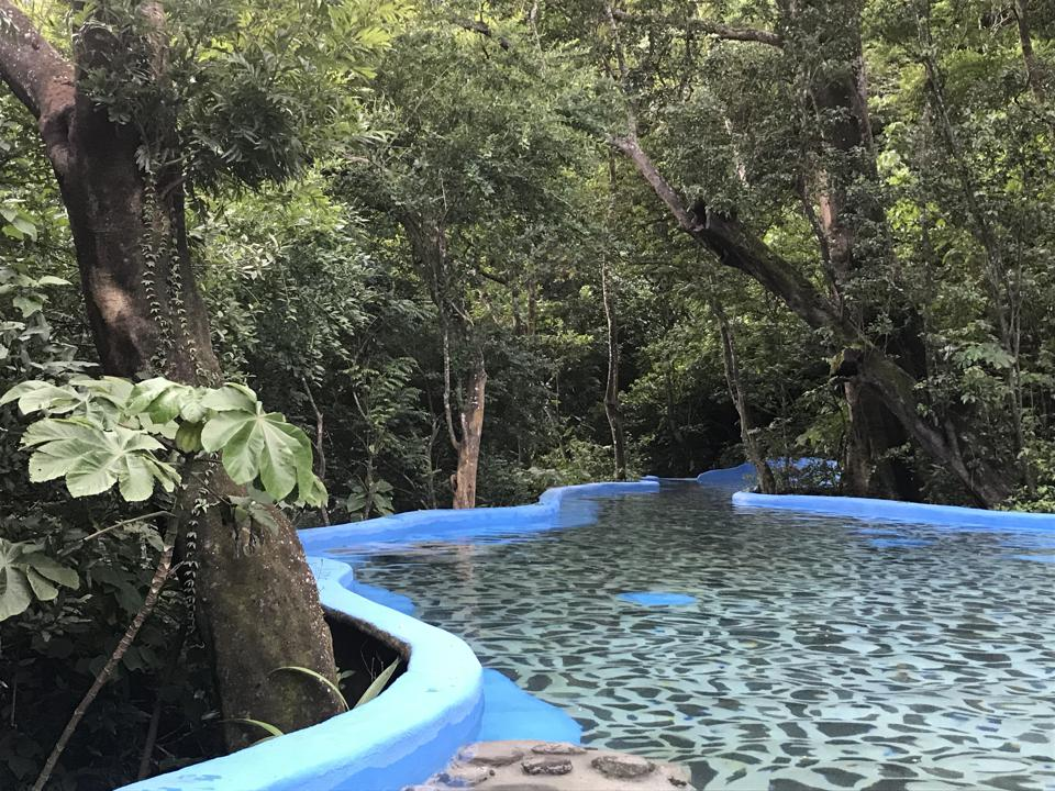 A swimming pool of natural hot springs water surrounded by green rainforest