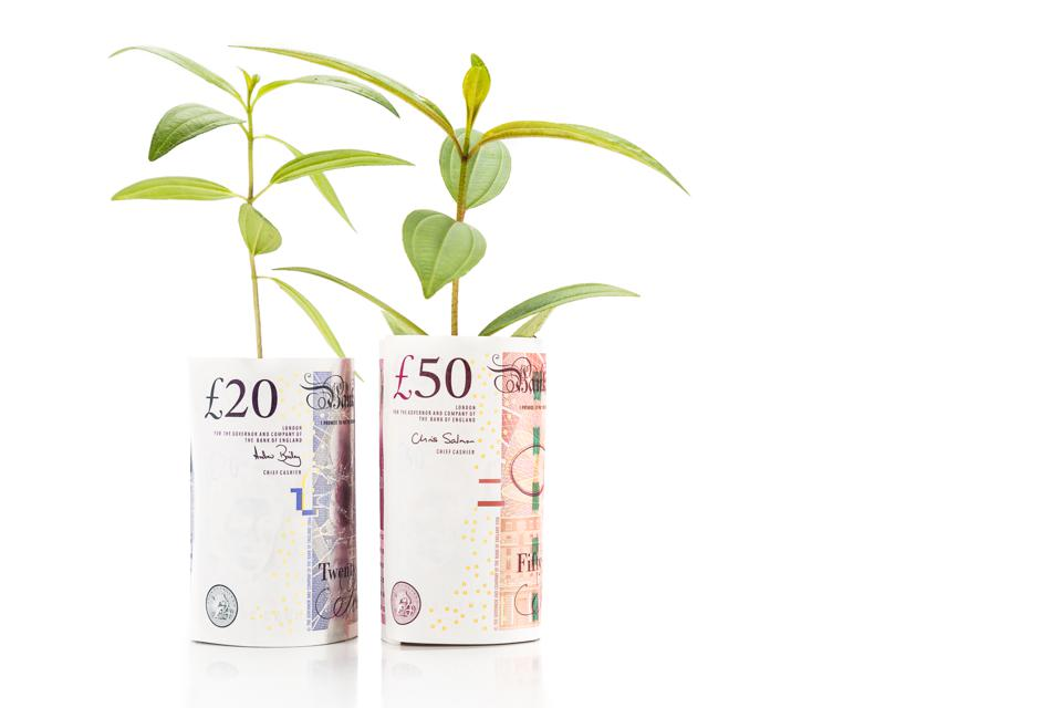 Concept of green plant grow on British Pound currency note