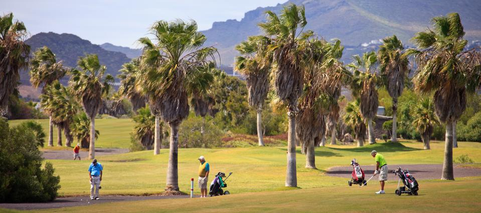 golfers on palm-fringed course