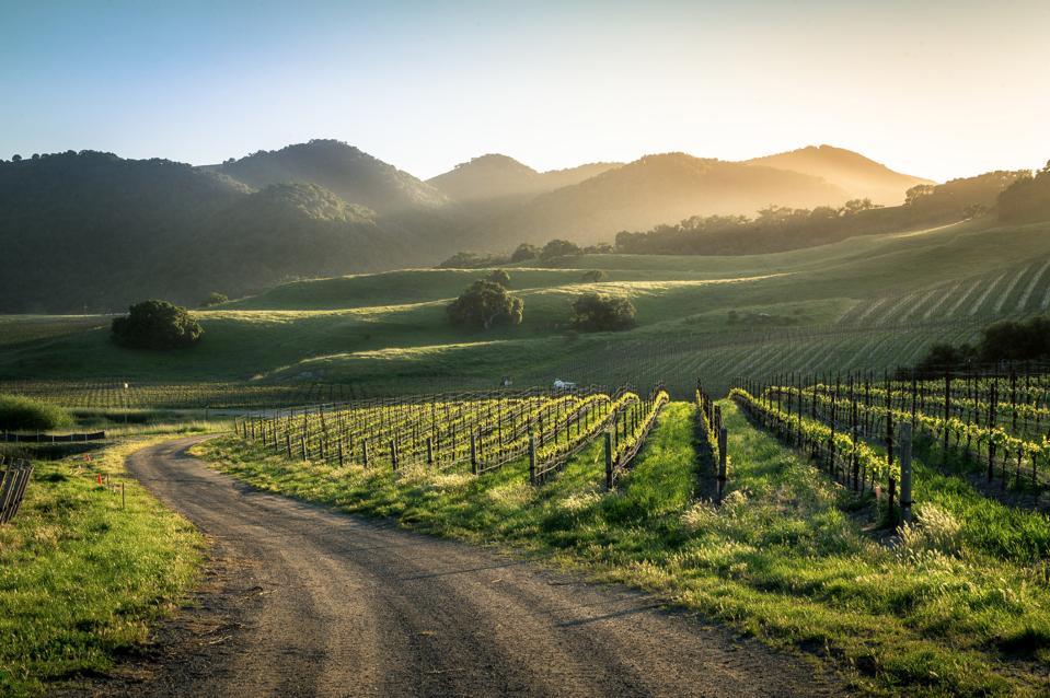Spanish Springs Vineyard in San Luis Obispo, California.