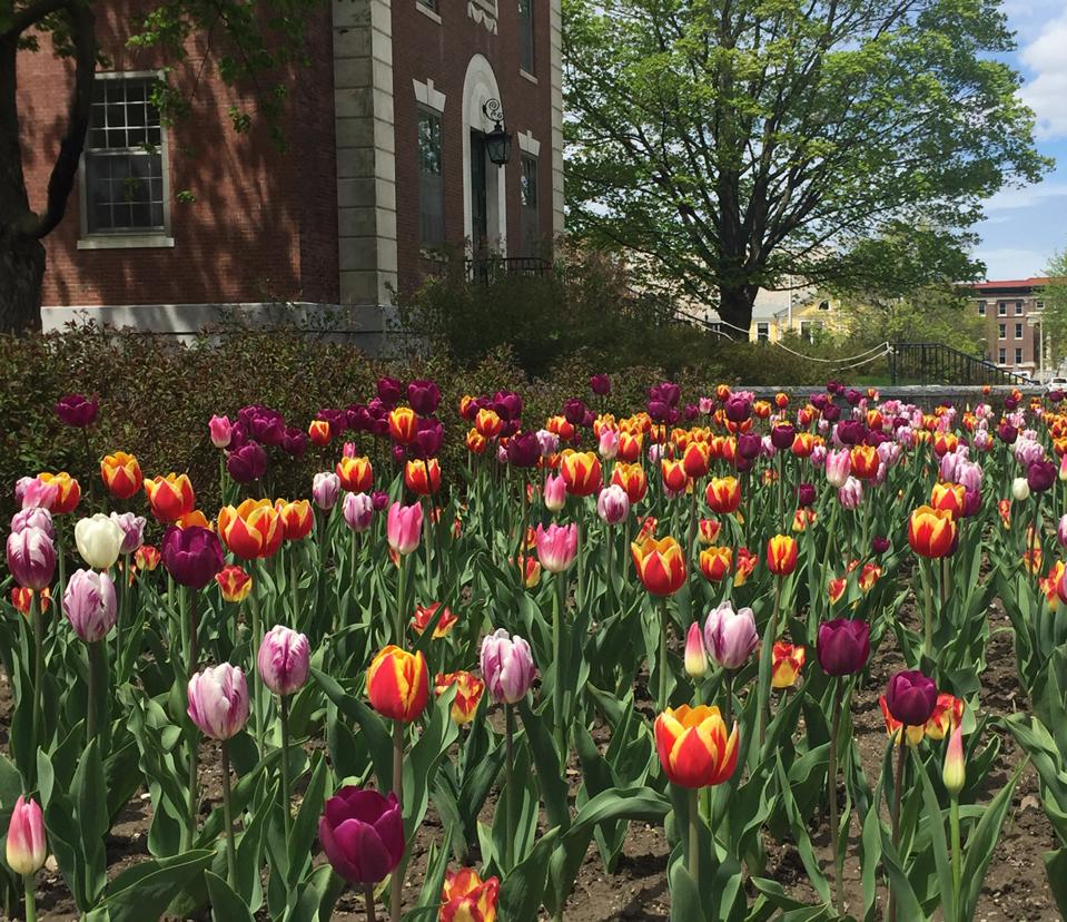 College campus with spring flowers
