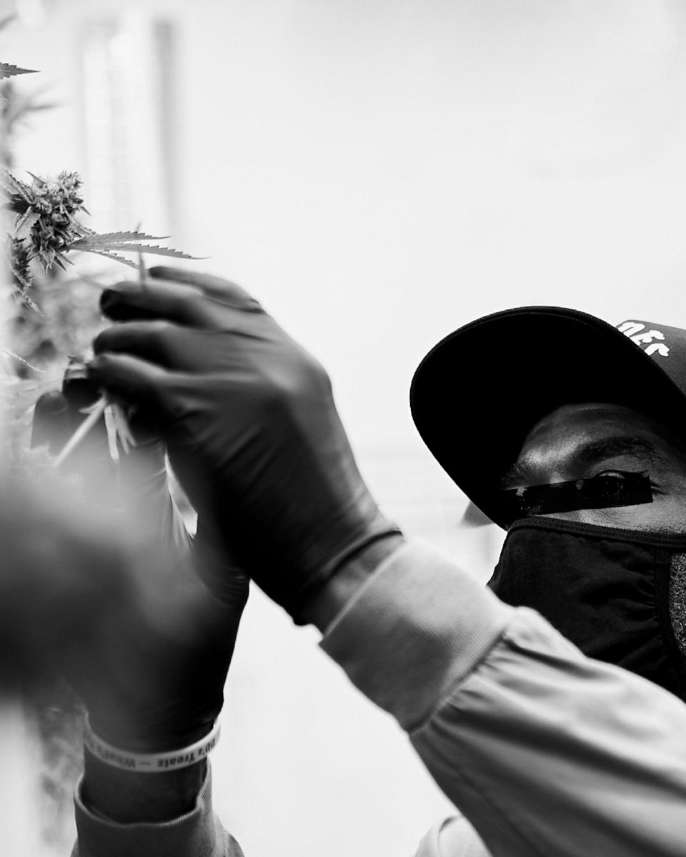 A grower in the cultivation room of Monogram, a new brand from Jay-Z and Caliva.