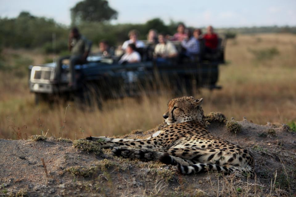 Wildlife Safari In Sabi Sands