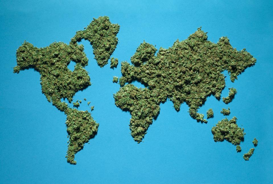 A World Map made of Marijuana
