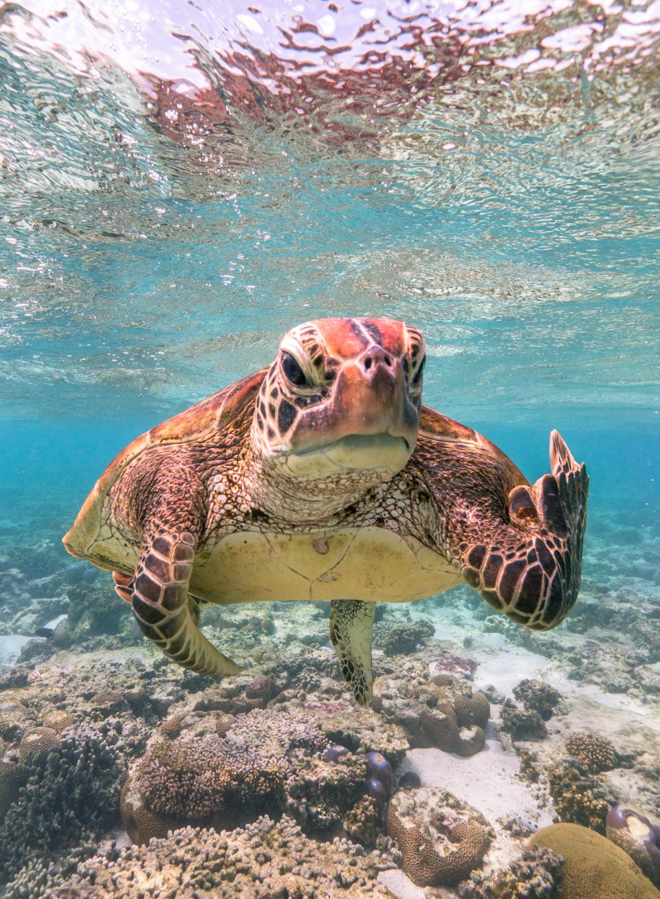 Comedy Wildlife Photo Awards: turtle showing the finger.