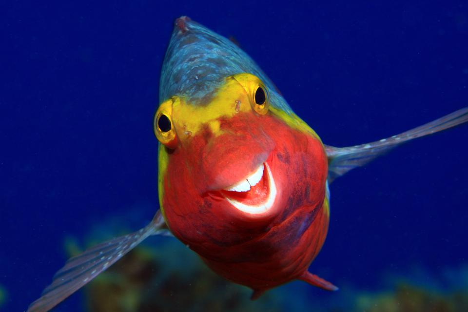 Funny Wild Animals photo competition: a smiley  colorful fish