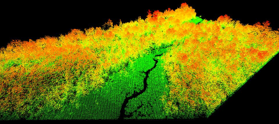 Satellite imagery of a forest stand.