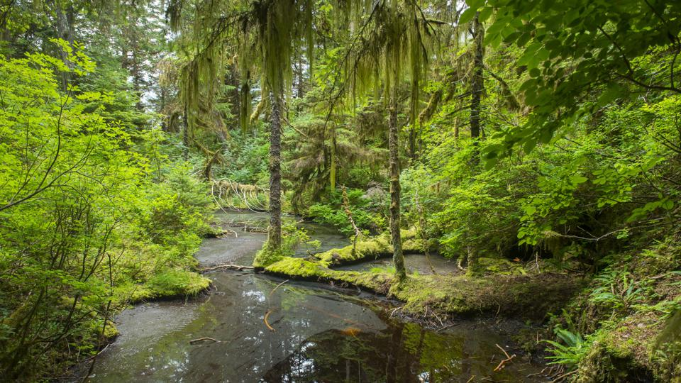 A forest scene at Takatz Bay on Baranof Island, Tongass...