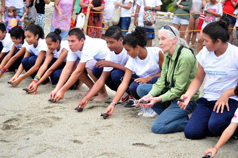 Jane Goodall and Roots & Shoots members in Santa Marta, Colombia, release sea turtles.
