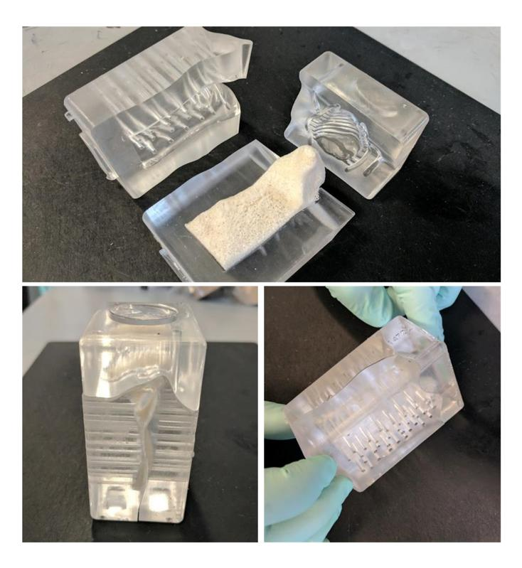 Pictures of the cartilage-bone graft in the bioreactor shell.