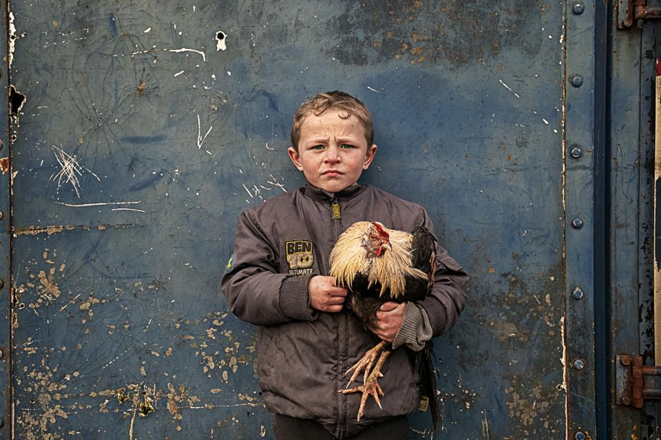 child with rooster