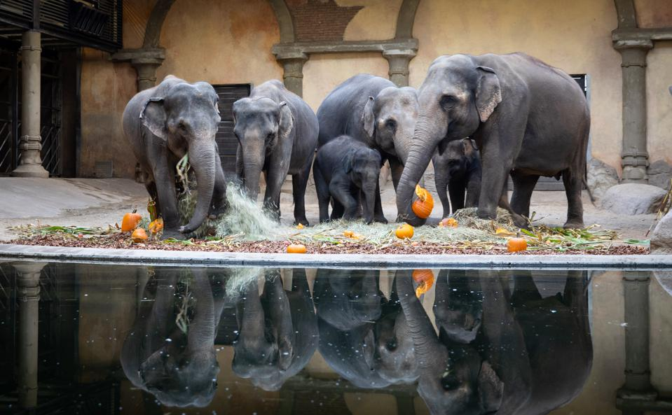 Halloween with the elephants in Hagenbeck Zoo, Germany