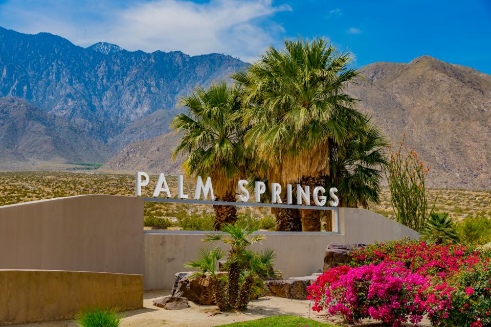 Bougainvillea and palm trees at sign in Palm Springs, California