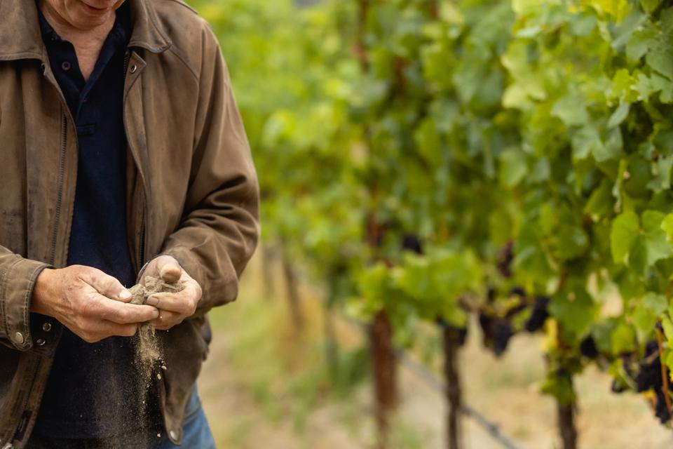 vineyard and winemaker with soil