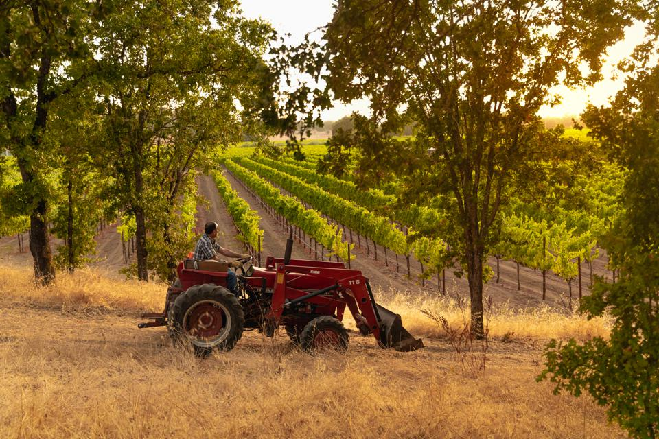 tractor in a California vineyard