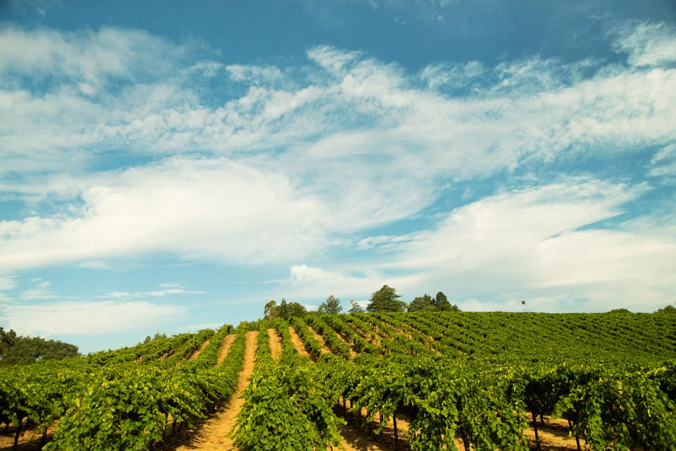blue sky and California vineyards, Sonoma County