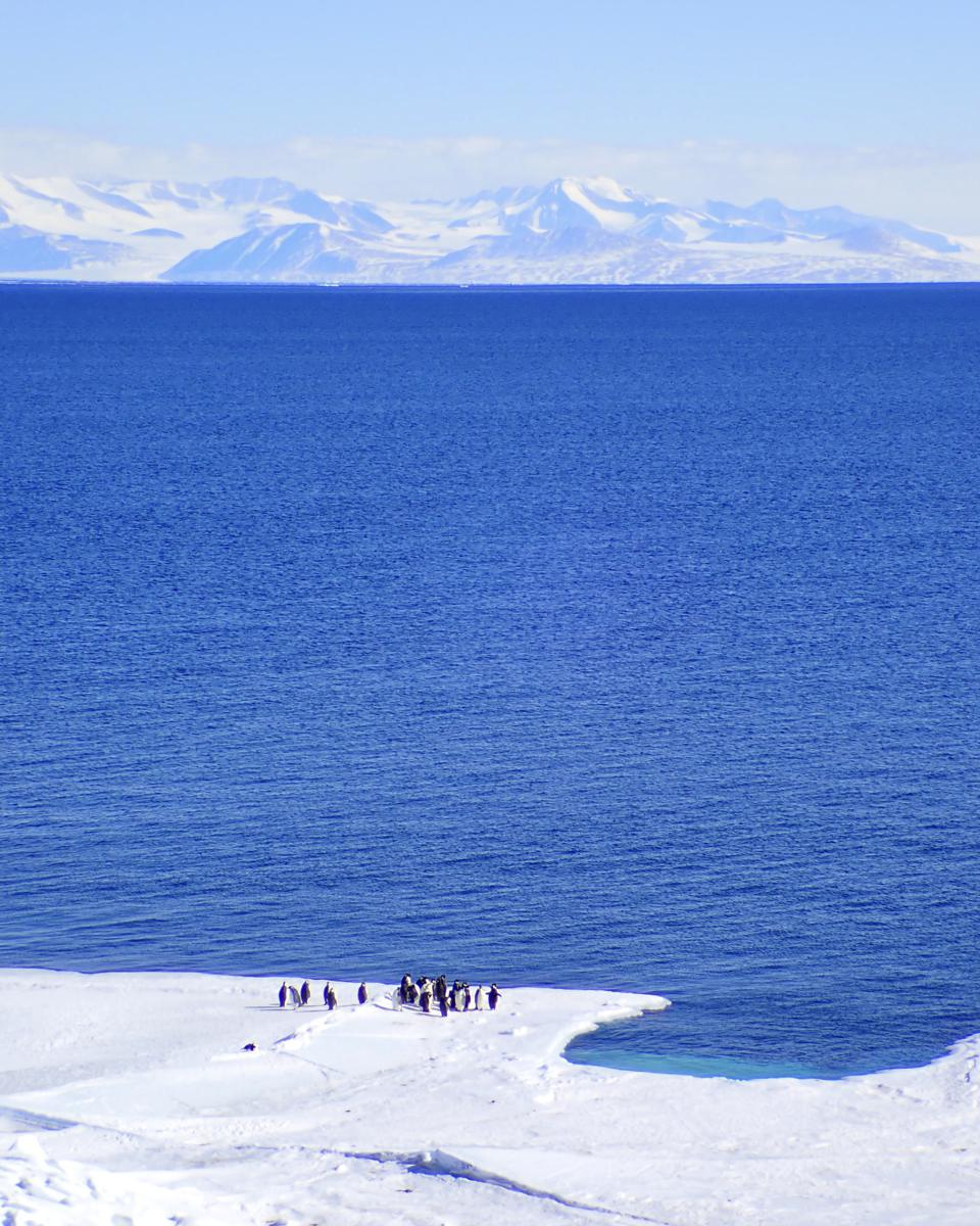 Emperor and adelie penguins gathered at the edge of the sea ice in the Ross Sea, near Cape Royds.