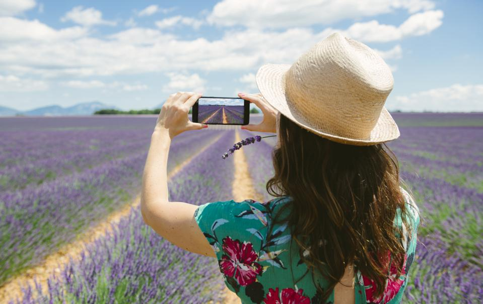 France, Provence, Valensole plateau, woman taking smartphone picture in lavender fields in the summer