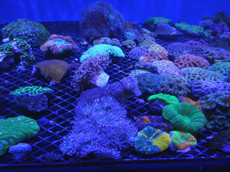Coral reef farming could open up a new pathway for the ocean bioeconomy, and ensure greater protection of these important ecosystems