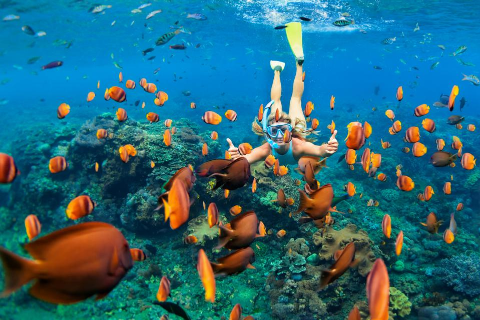 Protecting parts of the ocean with high biodiversity could transform ocean health