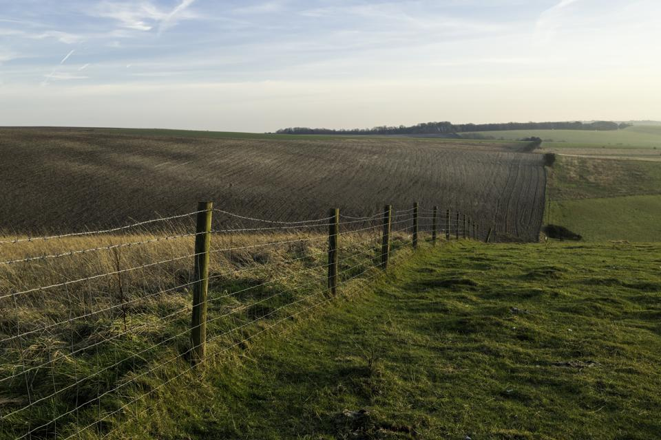South Downs Field, Sussex