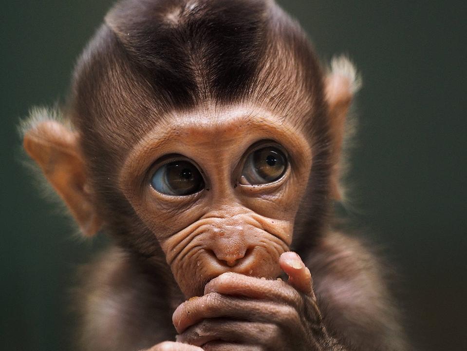 Best Animal Photos Contest: Close Up Of baby monkey