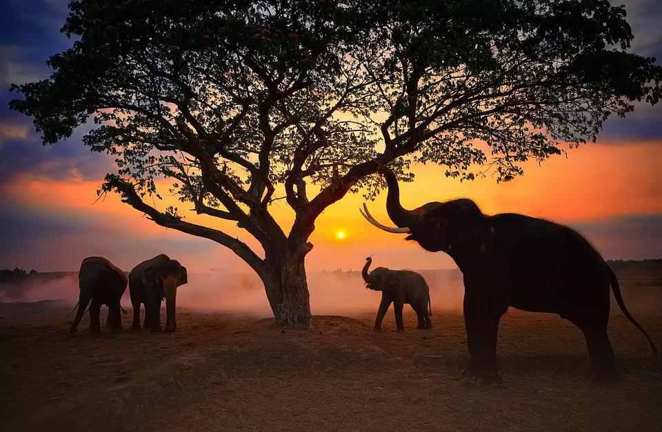 Best Animal Photos Agora Contest: a family of elephants against the orange sunset in Thailand.