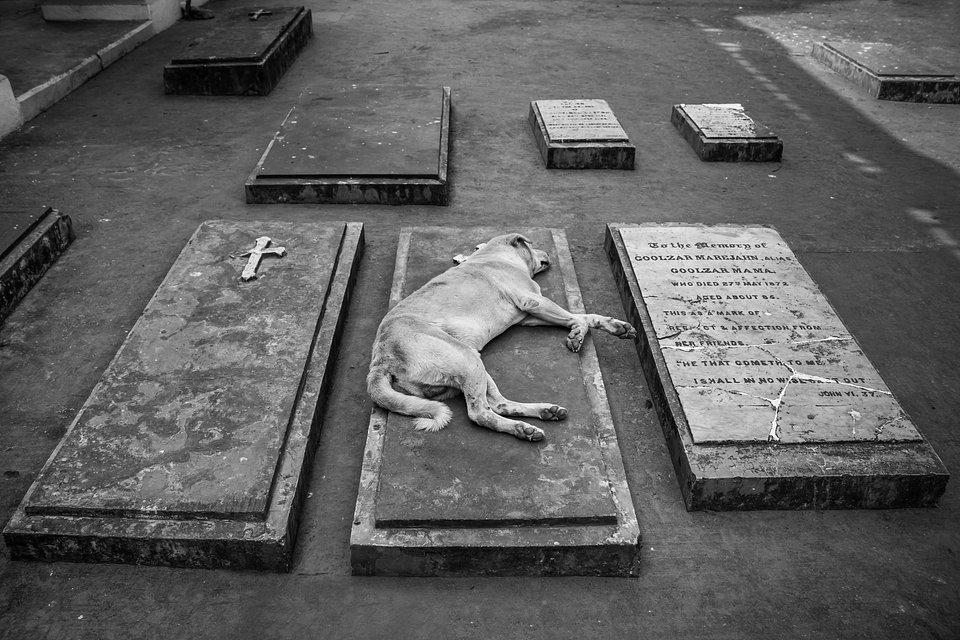 Best Animal Photos Agora Contest A dog lying on his master's grave.